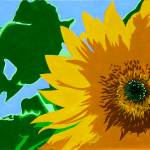 """""Sunflower"" original acrylic painting"" by marnold"