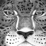 """Eyes of the Jaguar"" by 2dogstudio"