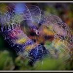 """""""Purple web"""" by edensdad"""