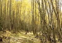 Arizona-Escudilla-Mountain gallery