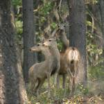 """132_3264bestdeerphoto"" by donnaridgway"