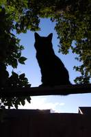 The Silhouette Cat