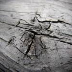 """""""Wood 3"""" by rbbm"""