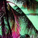 """Mexico palm 2A large blended"" by LeslieTillmann"