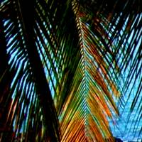 Mexico palm 1A enlarged