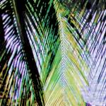 """Mexico palm 3A square enlarged bl"" by LeslieTillmann"
