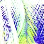 """Mexico palm 4A square enlarged bl negative"" by LeslieTillmann"