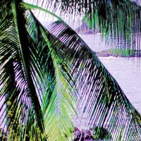Mexico palm 3A large blended