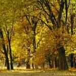 """""""Autumn at Yosemite Valley"""" by artundform"""