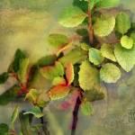 """Edge of Eden"" by danturner"