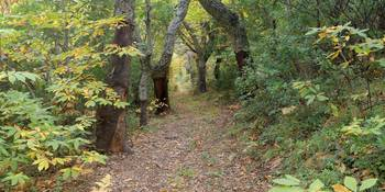 Autumn path in Provence forest