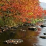 """Autumn Reflections"" by charlottelembo"