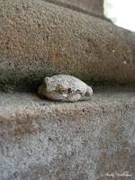 Cement Frog