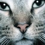 """""""cat"""" by backseatla"""