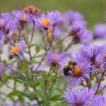 """Bee-autiful"" by pcrocks"