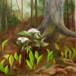 """White Trillium"" by FTMcKinstry"