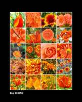 Orange Coloured Flowers 2008