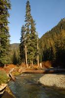 Box Canyon Creek  #1  Cascade Mountains
