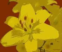 yellow flower.tif