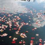 """On the Water"" by missmichellelisa"