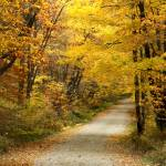 """Autumn Trees"" by charlottelembo"