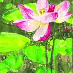 """Pink Water Lily"" by LauraHall"