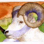 """Bighorn Sheep"" by art4fish"