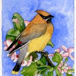 """Cedar Waxwing"" by art4fish"