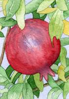 Pomegranate in Tree