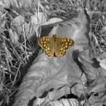 """""""butterfly"""" by scuba"""