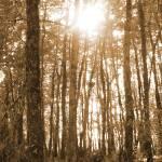 """""""trees"""" by scuba"""
