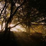 """Autumn Morning"" by lukeflickr"