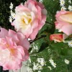 """""""Pink Roses"""" by kreinke"""