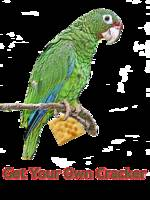 Parrot With Cracker
