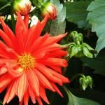 """""""Flowering With Buds !!"""" by kbprabu"""