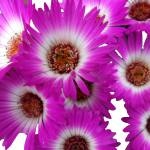 """Botanic Garden 011"" by peterivron"