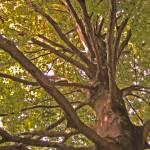 """""""My magical tree.jpg"""" by sweet-lemonade"""