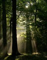 Sunrays in forest