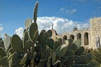 Cacti At the Mission