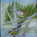 """Nashville and Blackburnian Warblers"" by Karlos"