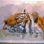 """Swimming Tiger"" by arlene72"