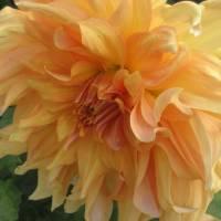 Yellow Orange Flower Art Prints & Posters by Tasha Haley