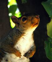 portrait of the squirrel