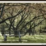 """park bench 2"" by starrienight"