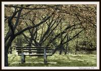 park bench 2