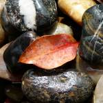 """stones328-detail-sml"" by shanmaree"
