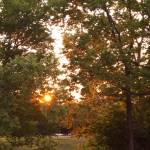 """""""sunset view behind shadybrook trees"""" by marthkess"""