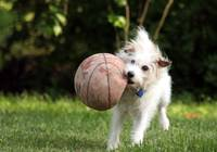 Dixie and her basketball