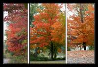 Fall Collage