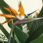 """Bird of Paradise 2"" by BehindTheLens"
